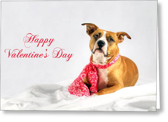 Doggies Greeting Cards - Fifty Shades of Pink - Happy Valentines Day Greeting Card by Shelley Neff
