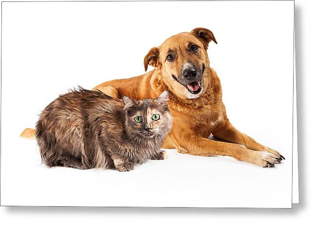 Friendly Greeting Cards - Happy Yellow Dog and Persian Cat Greeting Card by Susan  Schmitz