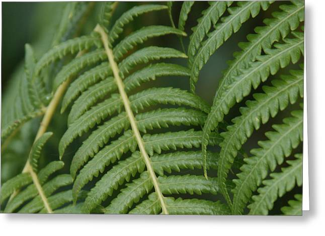 Abstracts From Nature Greeting Cards - Hapuu pulu Hawaiian Tree Fern Greeting Card by Sharon Mau