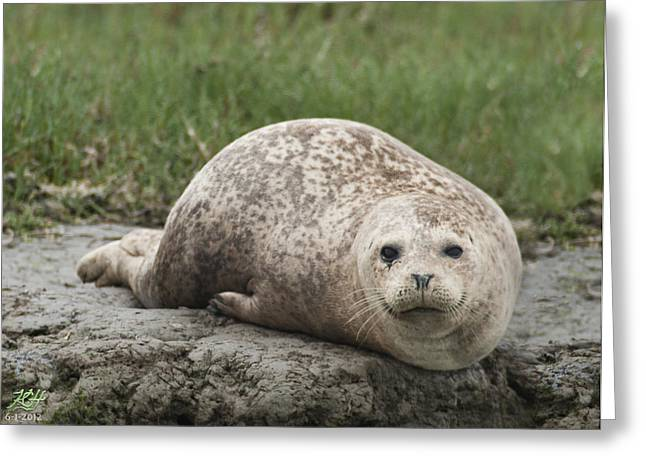 Moss Landing Boats Greeting Cards - Harbor Seal Greeting Card by Kenneth Hadlock