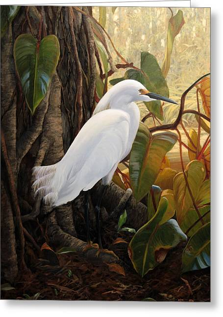 White Birds Greeting Cards - Hard to Hide Greeting Card by Tim Davis
