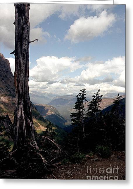 Tress Prints Greeting Cards - Hard to Live at 7000 Feet Greeting Card by Sharon Elliott