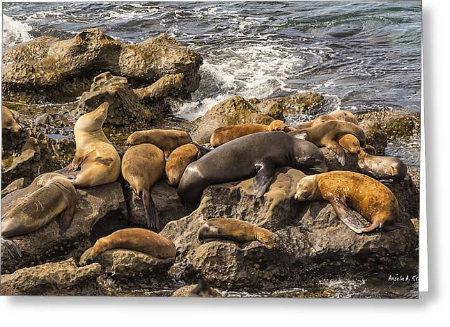 California Sea Lions Greeting Cards - Harem of Seals Greeting Card by Angela A Stanton