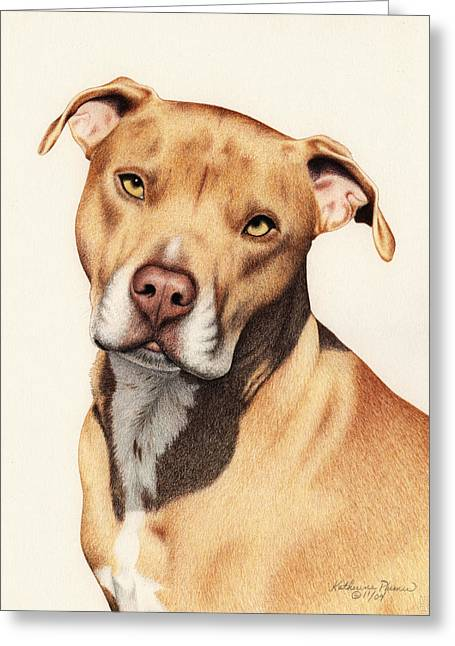 Bull Terrier Greeting Cards - Harley Greeting Card by Katherine Plumer