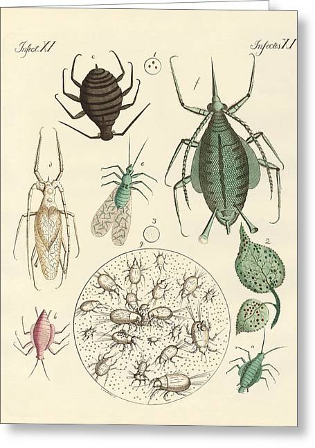 Flour Drawings Greeting Cards - Harmful insects Greeting Card by Splendid Art Prints
