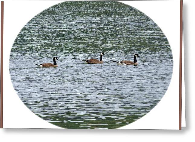 Harmonious Canada Geese Greeting Card by Will Borden
