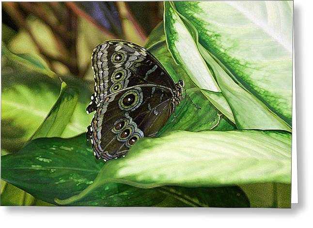 Butterfly Greeting Cards - Harmony Greeting Card by Aimee L Maher Photography and Art