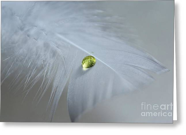 White Feather Greeting Cards - Harmony Greeting Card by Krissy Katsimbras