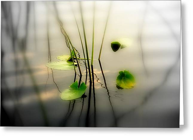Water Lilly Greeting Cards - Harmony ZEN Photography II Greeting Card by Susanne Van Hulst