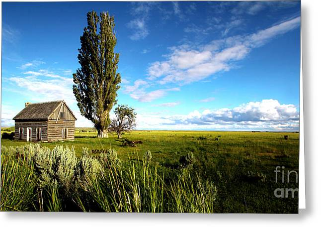 Michele Greeting Cards - Harney County Homestead Greeting Card by Michele AnneLouise Machholz