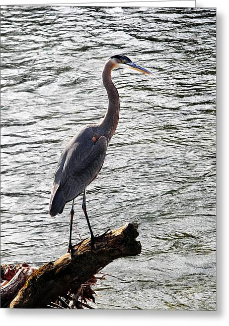 Fishing Creek Digital Greeting Cards - Haron Over the Water Greeting Card by Adam LeCroy