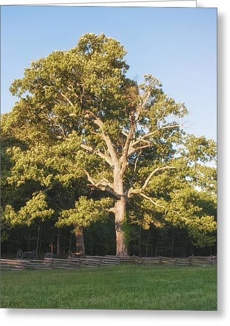 Landing Place Greeting Cards - Harpers Battery Tree Greeting Card by Mike Talplacido