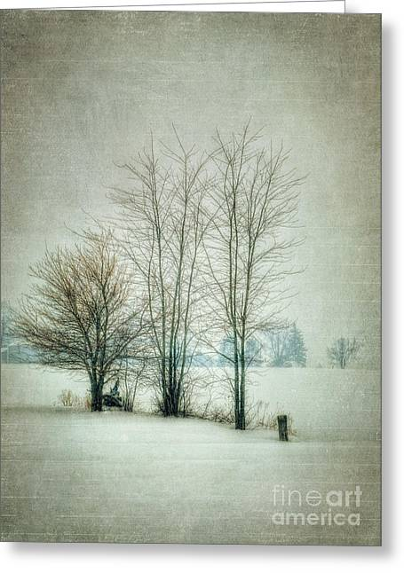 Winter Photos Greeting Cards - Harsh Greeting Card by Pamela Baker