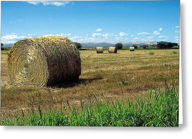 Hay Bales Paintings Greeting Cards - Harvest 3 Greeting Card by Terry Reynoldson
