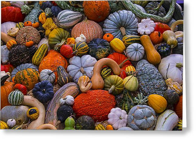 Gourd Greeting Cards - Harvest Abundance Greeting Card by Garry Gay