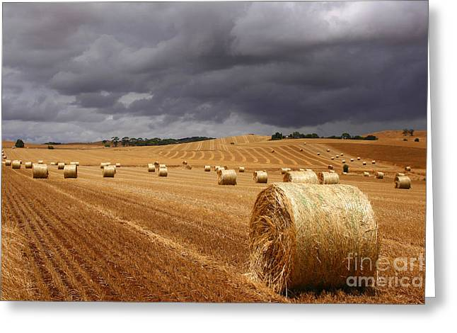 Hay Bales Greeting Cards - Harvest before the storm Greeting Card by John Wallace
