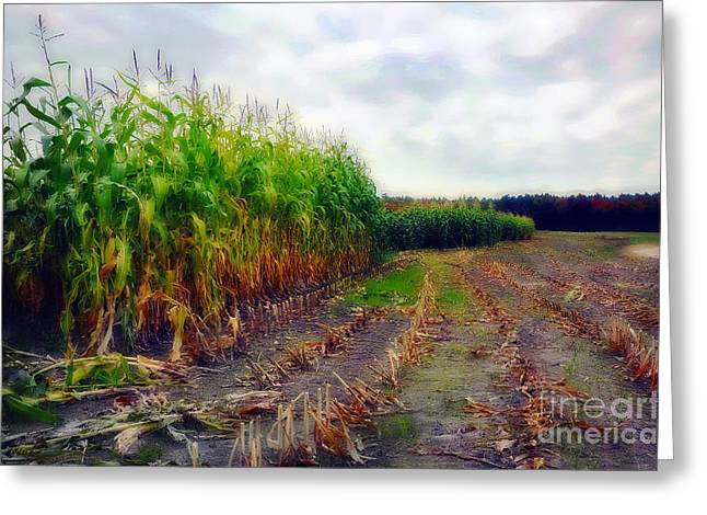 Corn Maze Greeting Cards - Harvest Greeting Card by Deena Athans