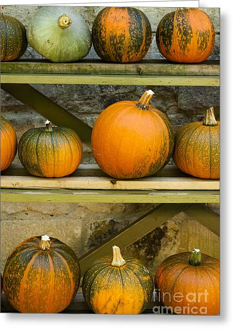 Thanks Giving Greeting Cards - Harvest Display Greeting Card by Anne Gilbert