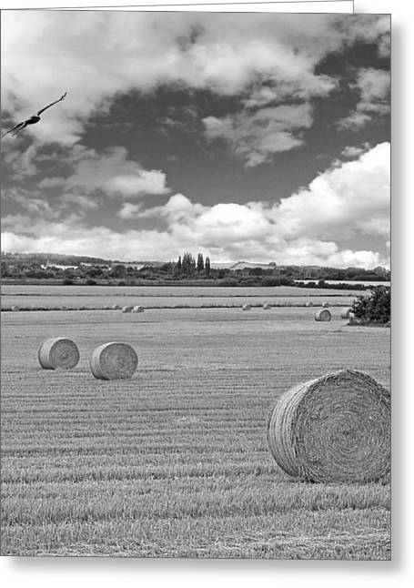 Hayroll Greeting Cards - Harvest Fly Past Black and White Square Greeting Card by Gill Billington