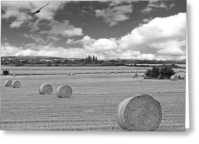 Harvest Fly Past Black And White Square Greeting Card by Gill Billington