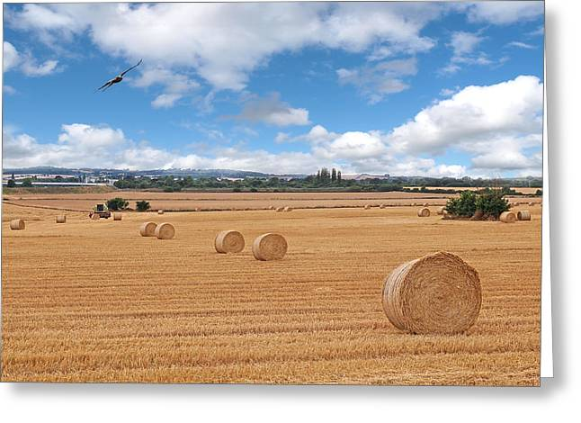 Hayroll Greeting Cards - Harvest Fly Past Greeting Card by Gill Billington