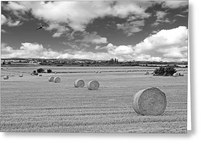 Hayroll Greeting Cards - Harvest Fly Past in Black and White Greeting Card by Gill Billington