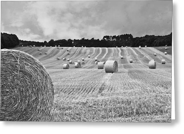 Hay Bales Greeting Cards - Harvest in black and white Greeting Card by Nomad Art And  Design