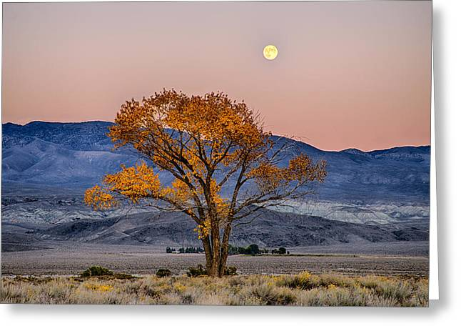Moonlit Greeting Cards - Harvest Moon Greeting Card by Cat Connor