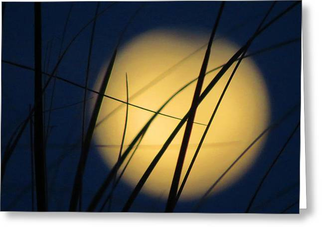 Moon Beach Greeting Cards - Harvest Moon Greeting Card by Dianne Cowen