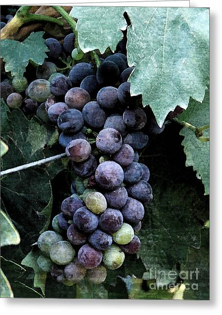 Bunch Of Grapes Greeting Cards - Harvest Ready Greeting Card by Bob Zuber