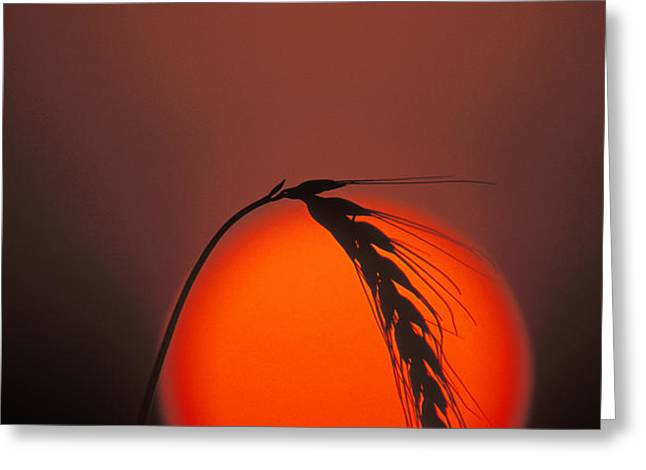 Harvest Sunset - FS000416 Greeting Card by Daniel Dempster