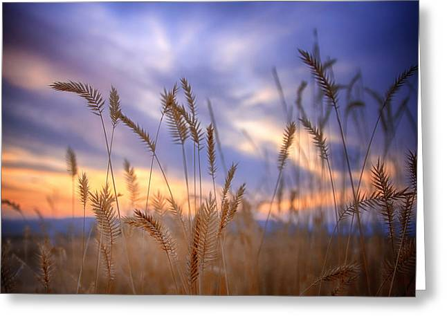 Wheat Field Sunset Print Greeting Cards - Harvest Sunset Greeting Card by Jess Williams