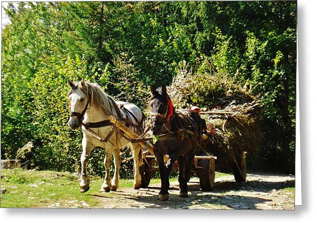 Horse And Cart Greeting Cards - Harvest Time Greeting Card by Alison Richardson-Douglas