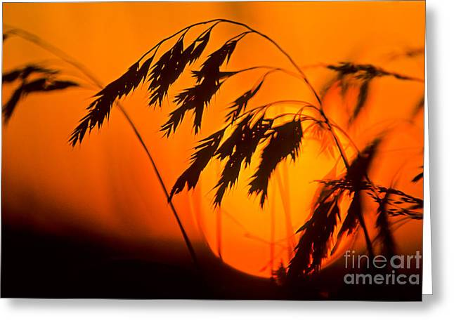 Harvest Time Greeting Cards - Harvest time Greeting Card by Michael Wheatley