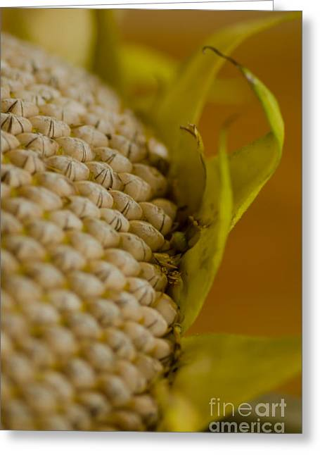 Harvest Time Greeting Cards - Harvest Time Greeting Card by Nick  Boren