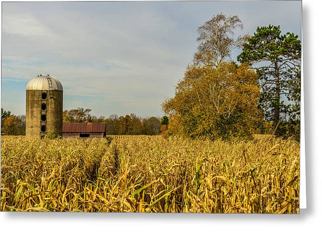 Cornstalks Greeting Cards - Harvest Time Greeting Card by Paul Freidlund