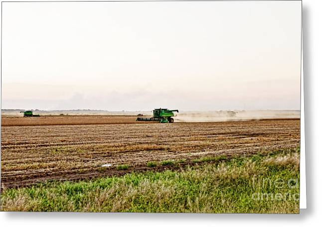 Green Beans Greeting Cards - Harvest Time Greeting Card by Scott Pellegrin