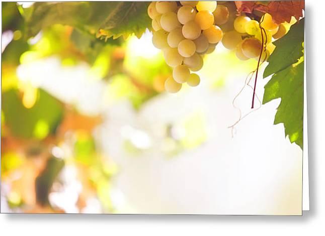 Harvest Time. Sunny grapes I Greeting Card by Jenny Rainbow