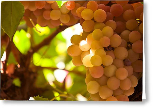 Harvest Time. Sunny Grapes III Greeting Card by Jenny Rainbow