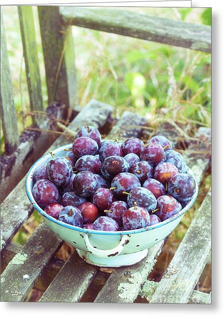 Fresh Picked Fruit Greeting Cards - Harvested Plums Greeting Card by Tim Gainey