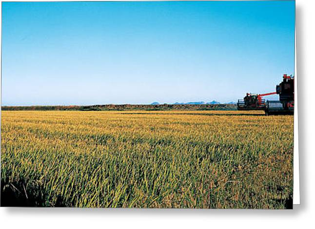 Mow Greeting Cards - Harvested Rice Field Glenn Co Ca Usa Greeting Card by Panoramic Images