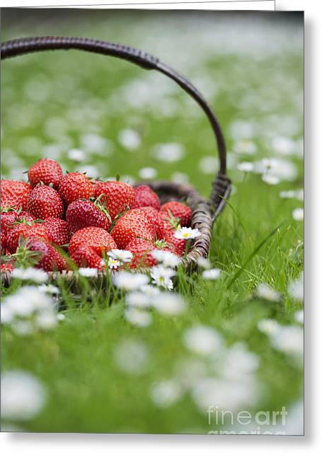 Fresh Picked Fruit Greeting Cards - Harvested Strawberries Greeting Card by Tim Gainey