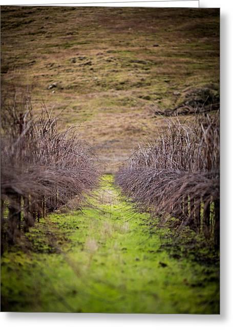 Harvested Vines Greeting Card by Mike Lee