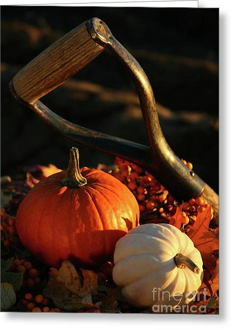 Harvesting For Thanksgiving Greeting Card by Sandra Cunningham