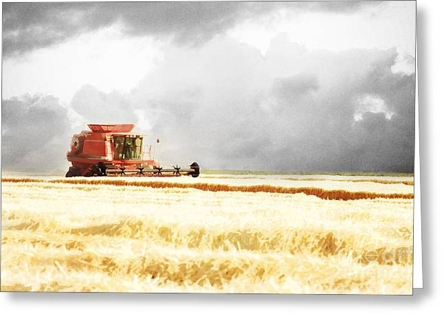 Harvest Art Greeting Cards - Harvesting the Grain Greeting Card by Cindy Singleton