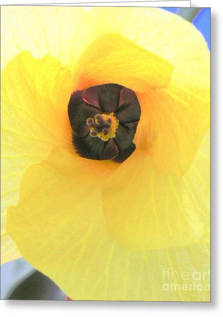 Haus Greeting Cards - Hau Blossom Greeting Card by Mary Deal