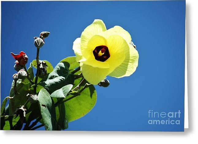 Haus Greeting Cards - Hau Flower Greeting Card by Craig Wood