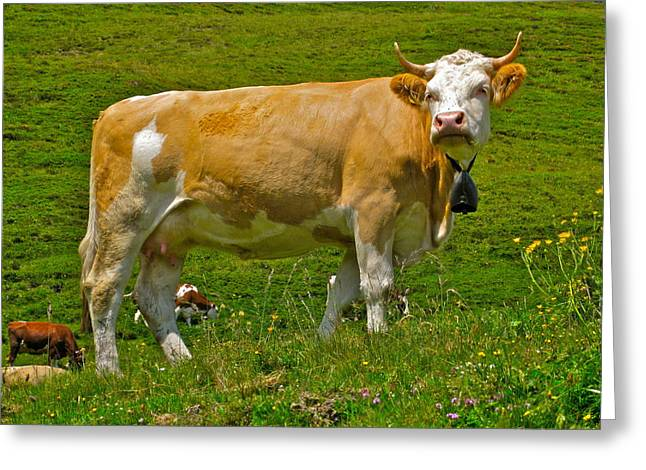 Disdain Greeting Cards - Haughty Bovine Greeting Card by Dwight Pinkley