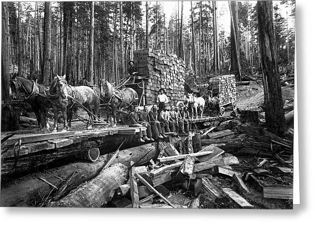 Loggers Greeting Cards - Hauling Redwood Shingle Bolts 1893 Greeting Card by Daniel Hagerman