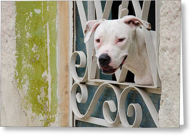 Havana Greeting Cards - Havana Watchdog Greeting Card by Rob Huntley